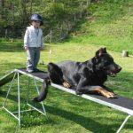 petit garçon qui dresse son chien couché école du chiot éduquer son chien
