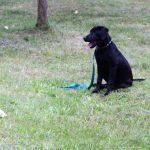 école du chiot éduquer son chien