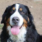 élevage de chien éduquer son chien