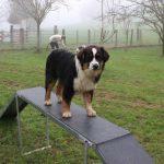 éduquer son chien école du chiot