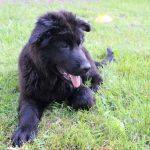école du chiot éducation canine