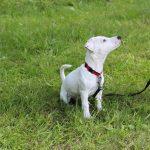 école du chiot éduiquer son chien