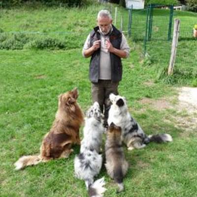 laurent loizzo éducateur de chiens avec ses 4 bergers australiens