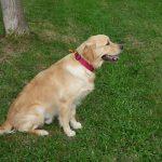 éduquer son chien éducation canine
