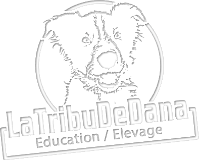 éducation canine élevage de chien
