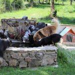 les chiens de la tribu de Dana en train de boire dans le bassin du parc
