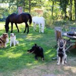 chiens de l'élevage de la tribu de dana assis dans l'herbe avec des chevaux blanc et marron