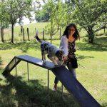 une maitresse avec son chiot berger australien sur un petit pont de l'école du chiot
