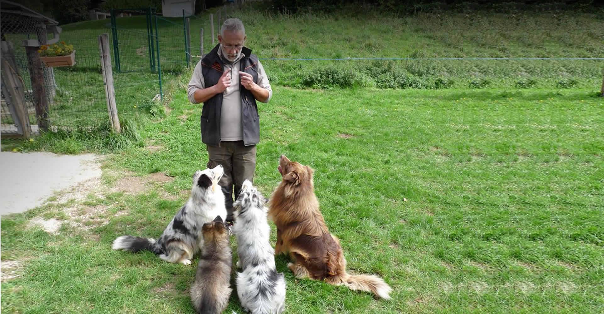 laurent Loizzo éleveur de chiens entourés de 4 bergers australiens de son élevage de bergers australiens