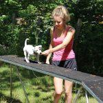 maitresse et chiot sur un petit pont école du chiot éducateur canin