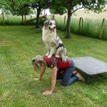 élevage bergers australiens élevage de chien école du chiot