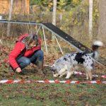 élevage bergers australiens acheter un chien éduqué