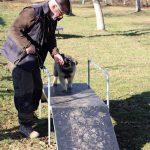 élevage de chien école du chiot