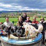 élevage de chien éducation canine