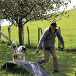 élevage de chien élevage bergers australiens