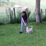 éducation canine école du chiot