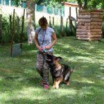 élevage altdeutscher schäferhund éducation canine