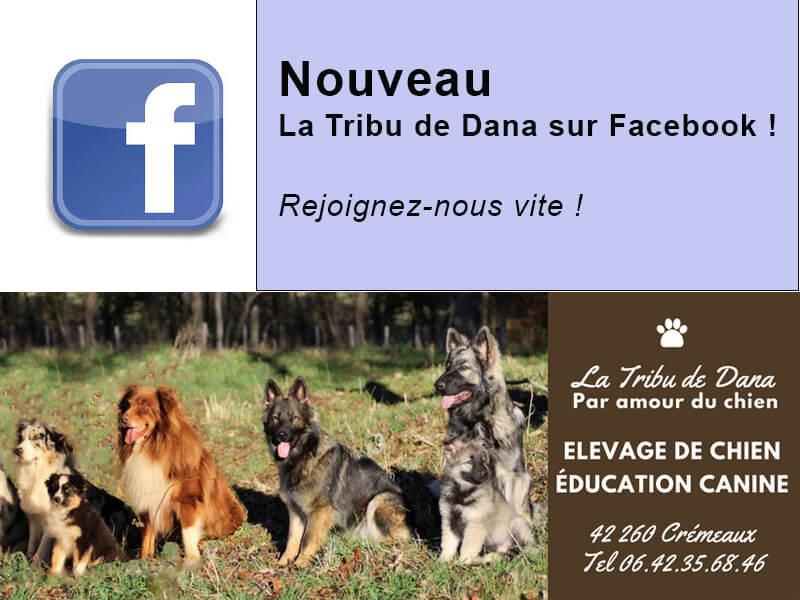 nouvelle page La Tribu de Dana sur Facebook - élevage berger allemand